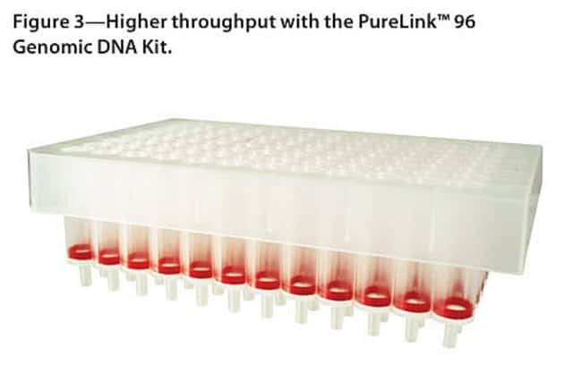 Higher throughput with the PureLink™ 96 Genomic DNA Kit.
