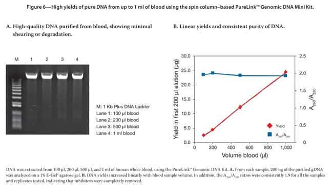 High yields of pure DNA from up to 1 mL of blood using the spin column–based PureLink™ Genomic DNA Mini Kit.