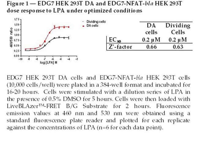 Figure 1 - EDG7 HEK 293T DA and EDG7-NFAT-bla HEK 293T dose response to LPA under optimized conditions