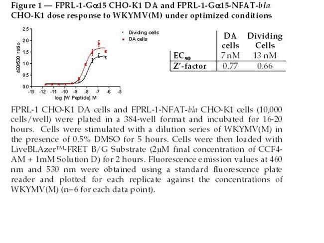 Figure 1 - FPRL-1-Gα15 CHO-K1 DA and FPRL-1-Gα15-NFAT-bla CHO-K1 dose response to WKYMV(M) under optimized conditions