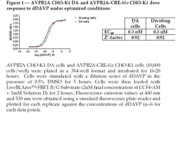 Figure 1 - AVPR2 CHO-K1 DA and AVPR2-CRE-bla CHO-K1 dose response to dDAVP under optimized conditions
