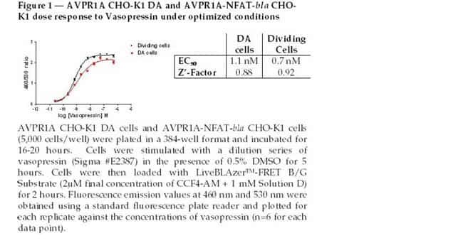 Figure 1 - AVPR1A CHO-K1 DA and AVPR1A-NFAT-bla CHO-K1 dose response to Vasopressin under optimized conditions