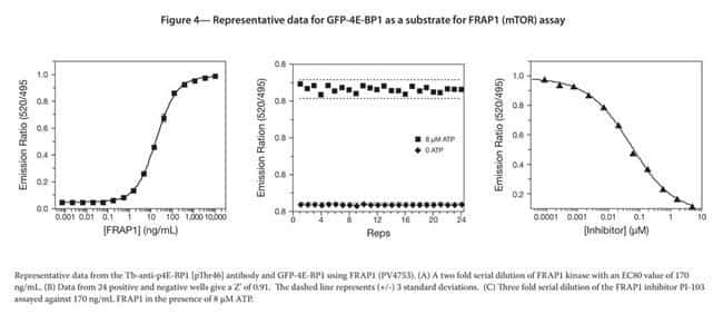 Figure 4 - Representative data for GFP-4E-BP1 as a substrate for FRAP1 (mTOR) assay