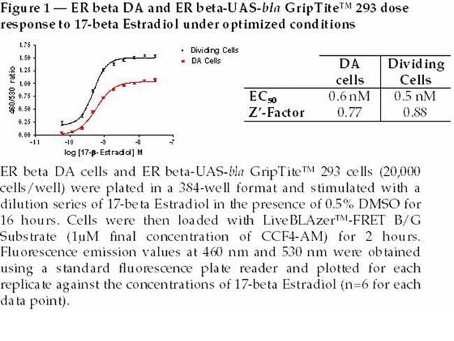 Figure 1  -  ER beta DA and ER beta-UAS-bla GripTite™ 293 dose response to 17-beta Estradiol under optimized conditions