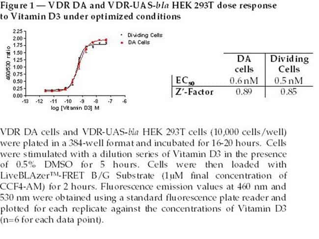 Figure 1  -  VDR DA and VDR-UAS-bla HEK 293T dose response to Vitamin D3 under optimized conditions