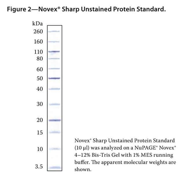 Novex® Sharp Unstained Protein Standard (Coomassie® stained).