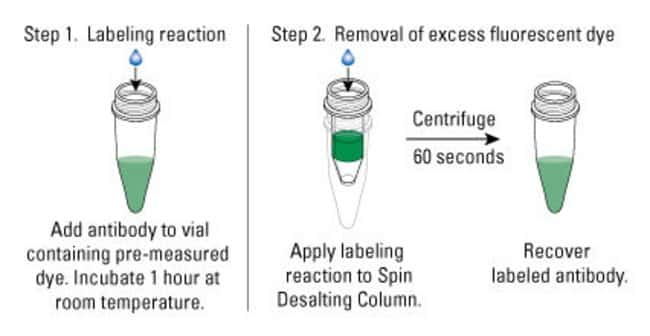 Procedure summary for DyLight 680-4xPEG Antibody Labeling Kits