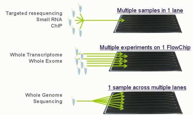 Figure 3: Flexible Sample Configurations with the 5500xl Genetic Analyzer