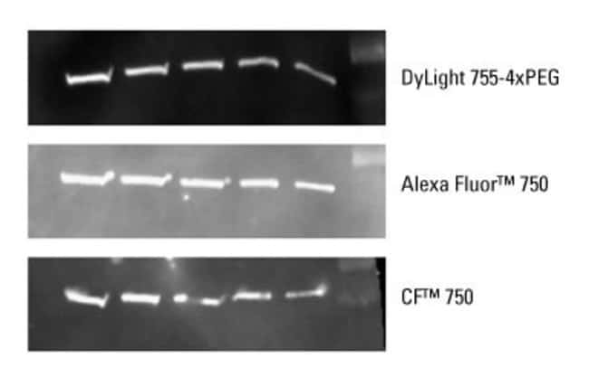 DyLight 755-4xPEG Dye is comparable to other spectrally similar fluors