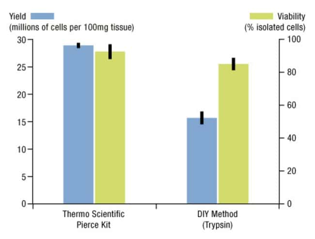Cell yield and viability after cell isolation using the Thermo Scientific Pierce Mouse Embryonic Fibroblast Isolation Kit. Mouse embryonic tissue at E11-13 were minced, incubated with Pierce Mouse Emb