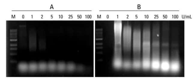 Cells where suspended in B-PER (A) or B-PER with lysozyme (B) with increasing concentrations of Pierce Universal Nuclease for Cell Lysis and incubated at room temperature for 30min. The lysates were t