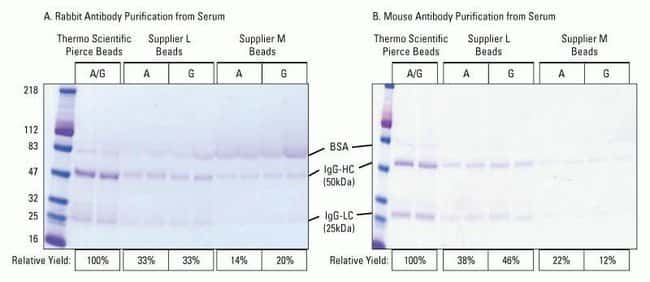 High capacity purification of IgG from rabbit and mouse serum with low background.