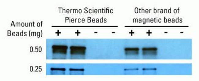 High capacity immunoprecipitation results with Pierce Streptavidin Magnetic Beads