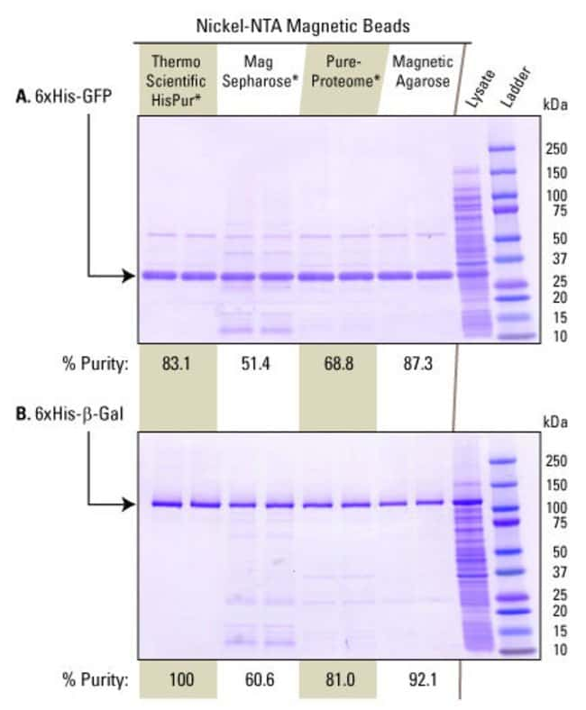 Bacterial lysate (100μg total protein) containing over-expressed 6xHis-GFP (Panel A) or over-expressed 6xHis-β Galactosidase (Panel B) was applied to 0.5mg of HisPur Ni-NTA Magnetic Beads, M
