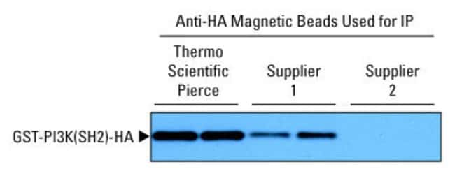 Better immunoprecipitation results with Anti-HA Magnetic Beads