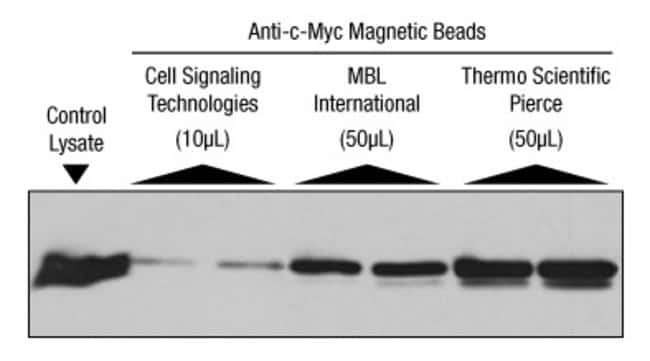 Better immunoprecipitation results with Anti-c-Myc Magnetic Beads