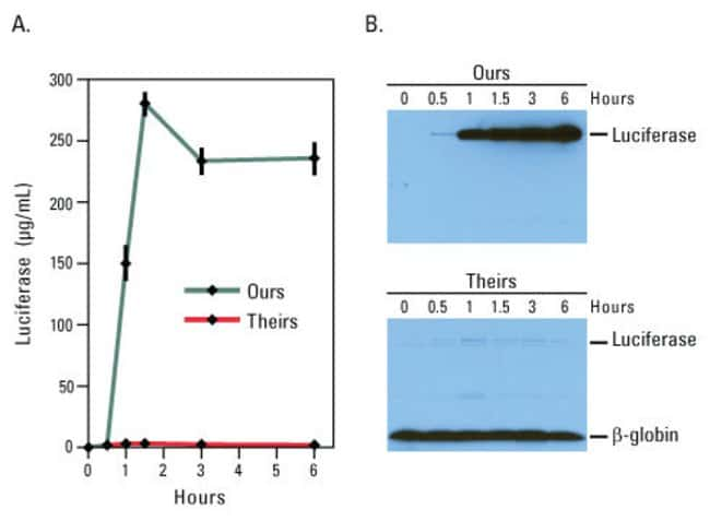 <em>In vitro</em> luciferase expression reactions were performed with the 1-Step Human Coupled IVT Kit and the Promega TnT* T7 Quick Coupled Transcription/Translation System according to supplied inst