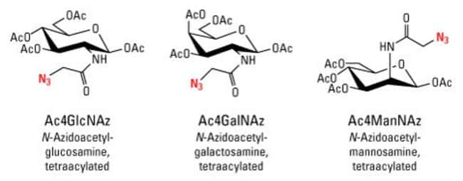 Chemical structures of Azido-Sugars for metabolic labeling