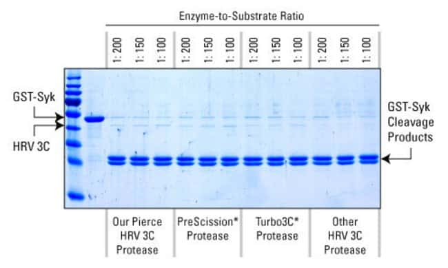 HRV 3C Protease activity is comparable to protease from other suppliers