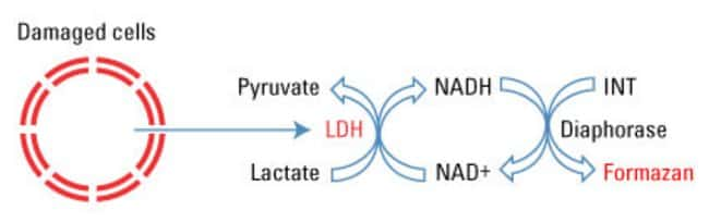 Metabolic and chemical basis of the LDH cytotoxicity assay
