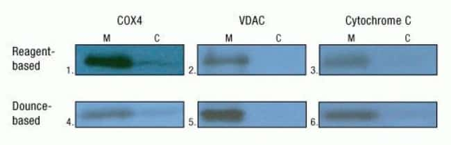 Mitochondria (M) and cytosolic (C) fractions were prepared from fresh rat liver (Panels 1, 2, 3, 5 and 6) and heart (Panel 4) tissue samples using the reagent-based and Dounce homogenization methods o
