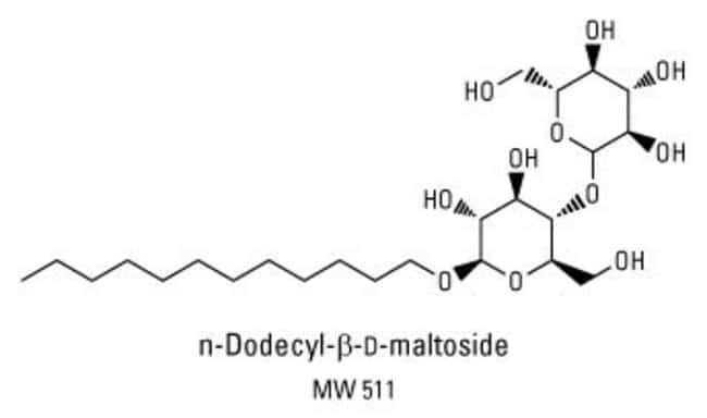 Chemical structure of n-Dodecyl-beta-D-maltoside detergent