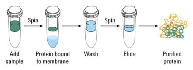 Protocol summary for Strong Cation and Anion Ion Exchange Spin Columns