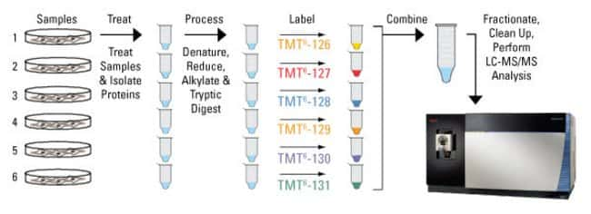Protein extracts isolated from cells or tissues are reduced, alkylated and digested overnight. Samples are labeled with the TMT Reagents and then mixed before sample fractionation and clean up. Labele