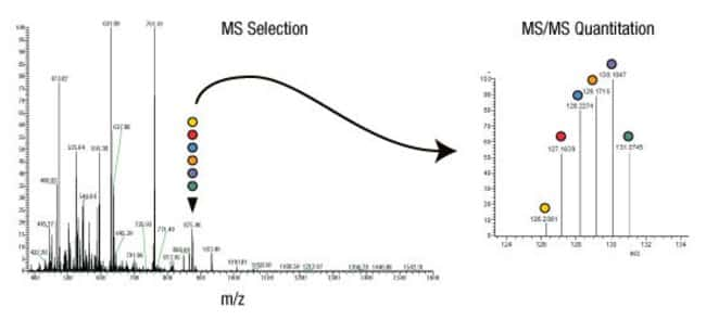 The relative abundance of the target protein or peptide fragment in six different samples is easily measured by comparing the signature mass peaks generated by the different mass tags.