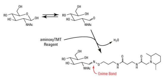 Reaction scheme for labeling of reducing-end sugars with aminoxyTMT Reagent