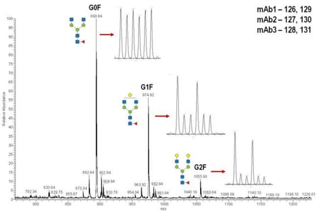 Relative quantitation of glycans from monoclonal antibodies