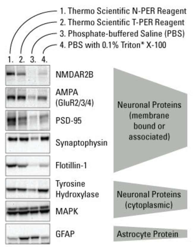Better extraction of specific neuronal proteins