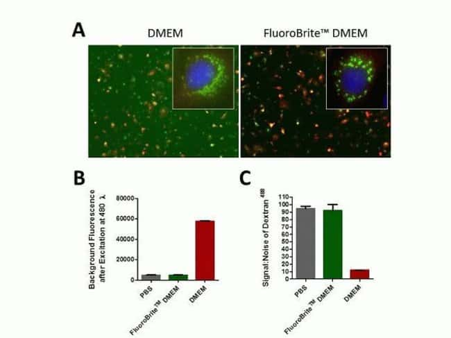 FluoroBrite™ DMEM compared to standard phenol red–free DMEM