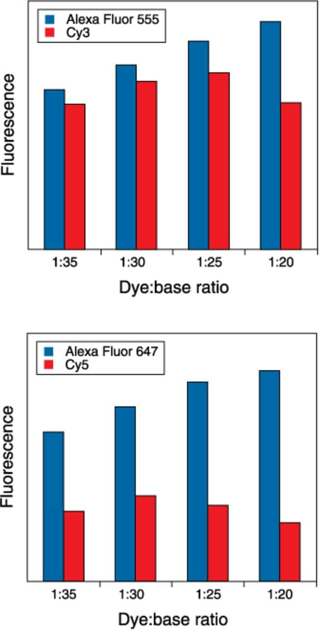 Change in signal brightness with level of labeling for Alexa Fluor® versus Cy dye–labeled DNA.