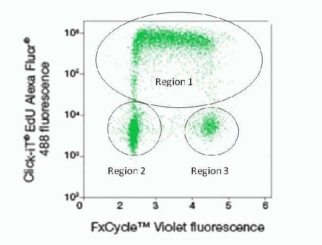 Dual parameter plot of Click-iT® EdU Alexa Fluor® 488 and FxCycle™ Violet.