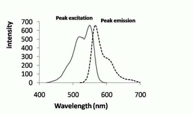 Fluorescence Excitation and Emission Spectra of the Oxidized CellROX® Orange Reagent