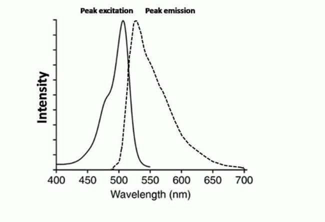 Fluorescence Excitation and Emission Spectra of the Oxidized CellROX® Green