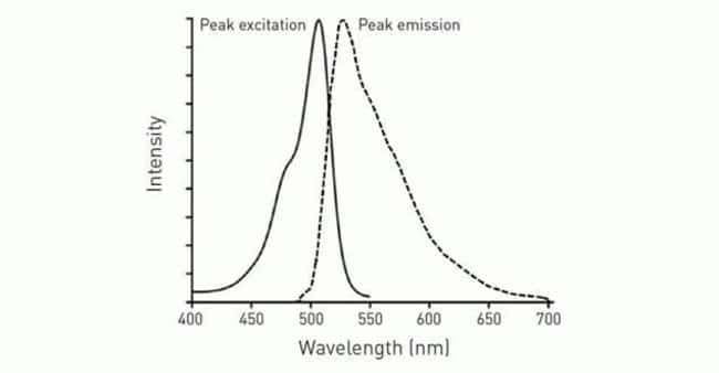 Fluorescence excitation and emission spectra of the CellROX® Green Reagent following oxidation.