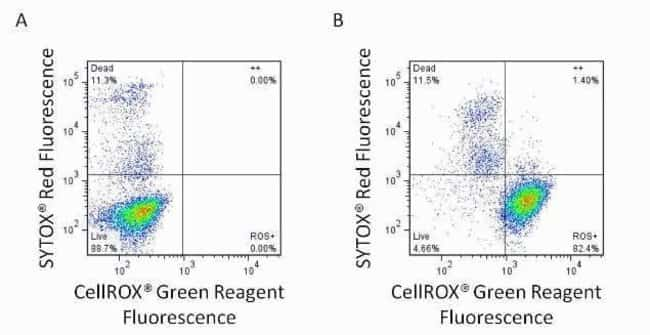 CellROX® Green Reagent can be used in conjunction with SYTOX® Red Dead Cell Stain to differentiate live stressed cells from dead cells.