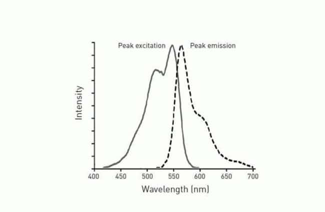 Fluorescence excitation and emission spectra of the CellROX® Orange Reagent following oxidation.