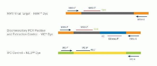 Figure 3. Multiplex Assay and Control Design.