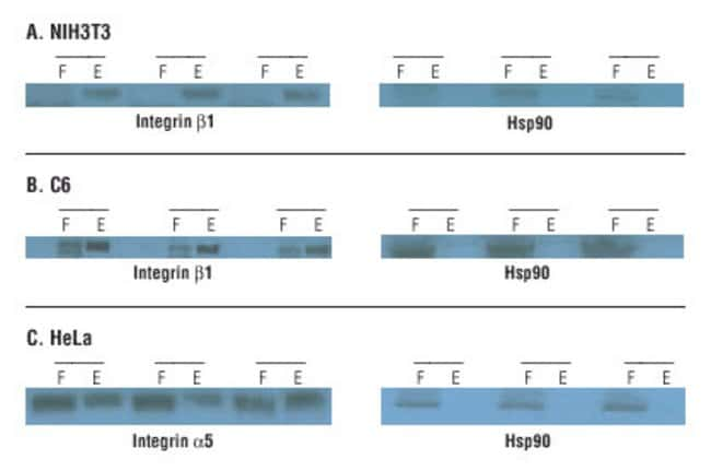 NIH3T3, C6 and HeLa cells were labeled with Sulfo-NHS-SS-Biotin and triplicate samples were processed as described in Methods. Flow-through and elution fractions were analyzed by Western blot for cell