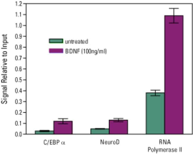 The Agarose ChIP Kit demonstrates binding of NeuroD, C/EBPα and RNA polymerase II to the proximal cFos promoter