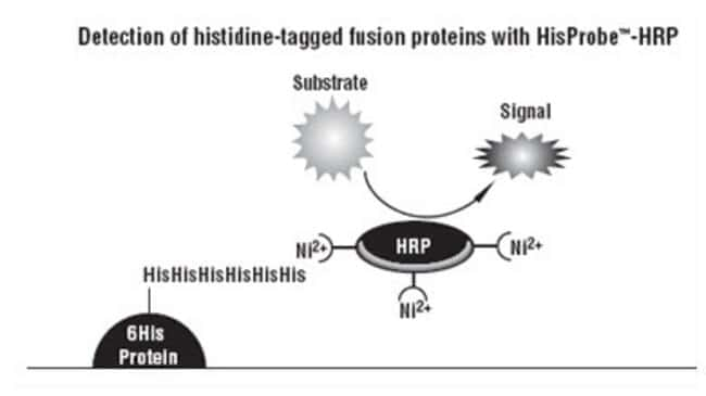 Mechanism for detection with HisProbe-HRP probe