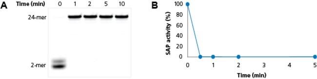 Fig. 2, <b>ExoSAP-IT <i>Express</i> inactivation at 80°C.</b>