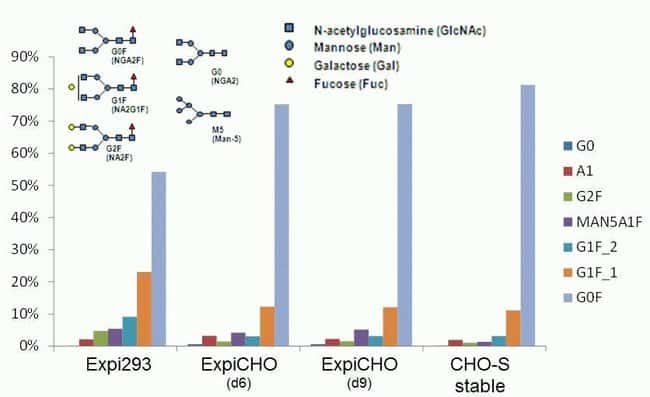 Glycosylation of proteins in the ExpiCHO transient expression system is similar to stable CHO expression