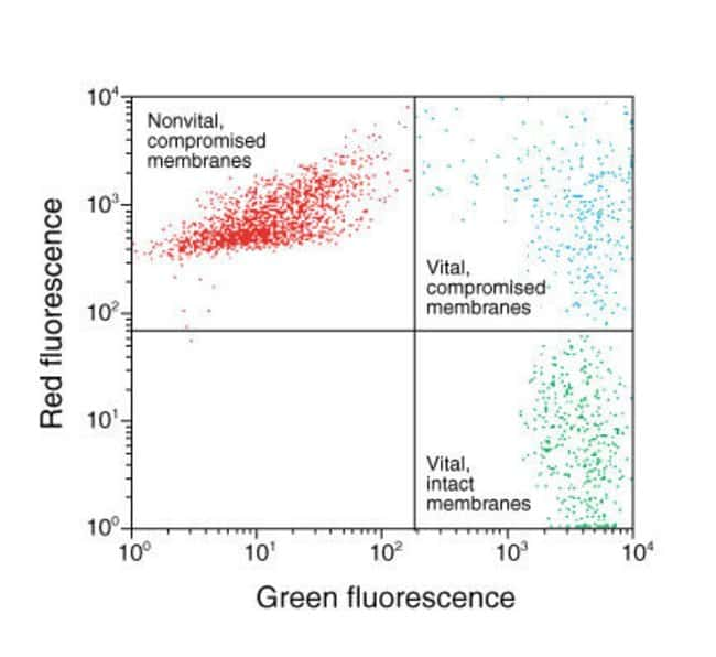 FungaLight™ CFDA AM/Propidium Iodide Yeast Vitality Kit - Saccharomyces spp. cell suspensions stained with CFDA AM dye and propidium iodide and analyzed using a BD FACSCalibur™ flow cytometry system.