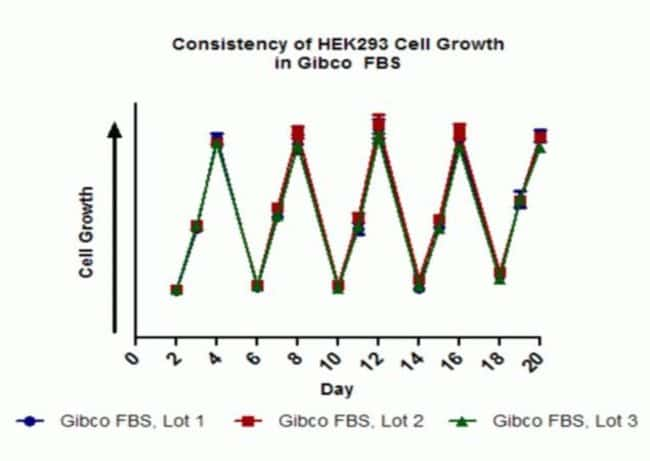 Consistency of HEK293 Cell Growth in Gibco® FBS: