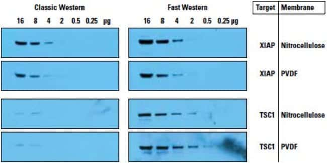 293T cell lysate was diluted in reducing sample buffer and loaded to a gel. After electrophoresis, proteins were transferred to nitrocellulose and PVDF membranes using a semi-dry blotter for 10 minute