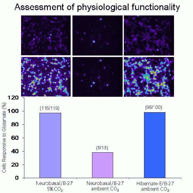 Glutamate-induced changes in intracellular calcium levels measured with fluo-4 Direct™. Pseudo-color images before (top) and after (bottom) challenge with 500 mM glutamate are shown.  Purple represent
